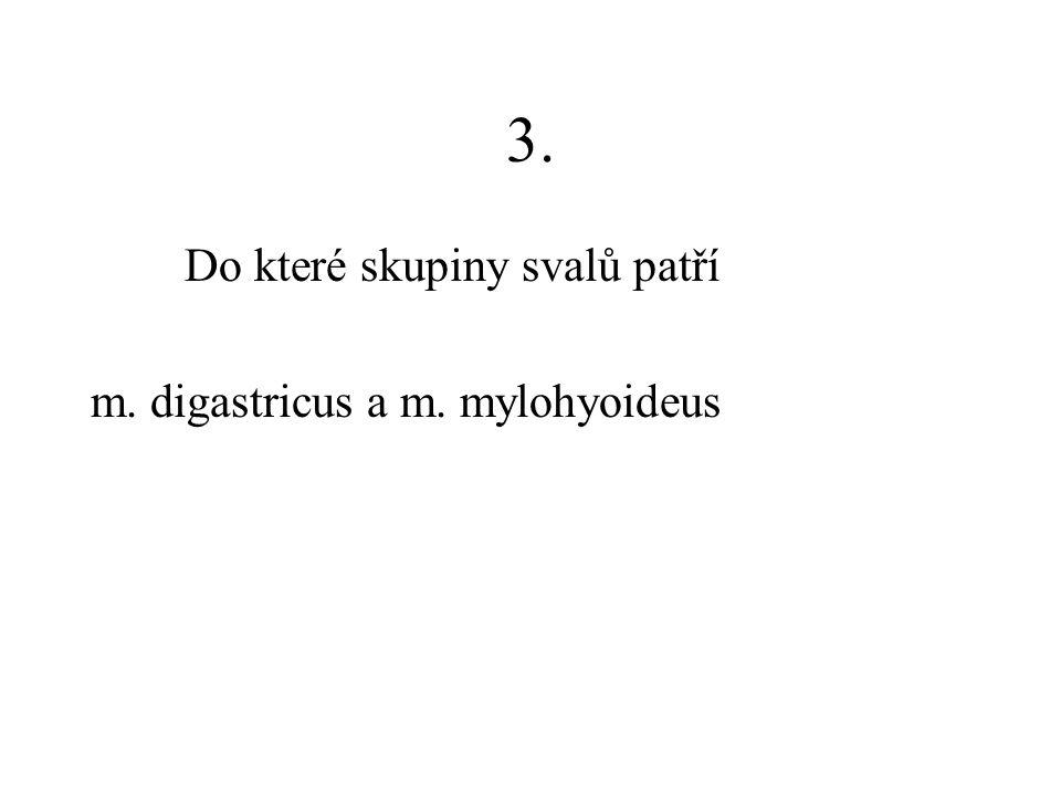 3. Do které skupiny svalů patří m. digastricus a m. mylohyoideus