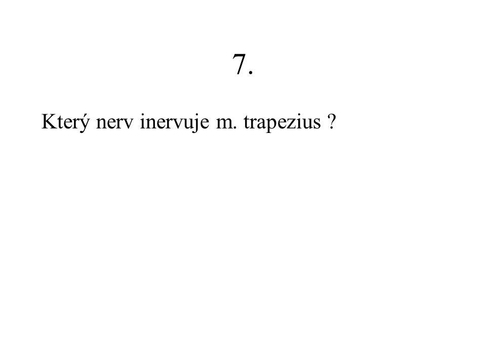 7. Který nerv inervuje m. trapezius
