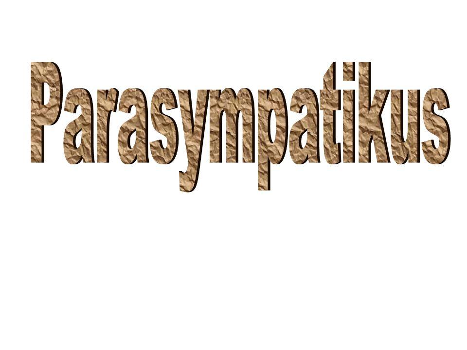 Parasympatikus