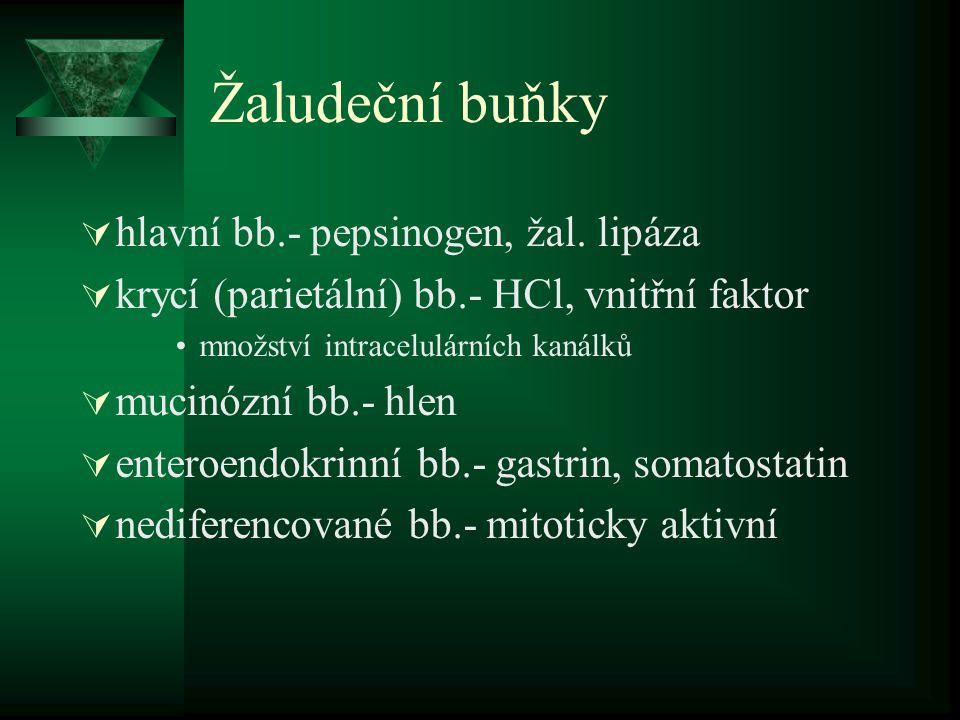 Žaludeční buňky hlavní bb.- pepsinogen, žal. lipáza