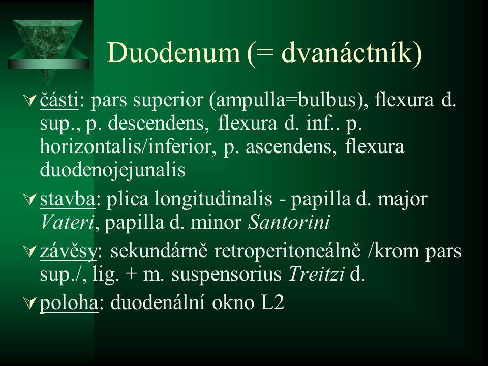 Duodenum (= dvanáctník)