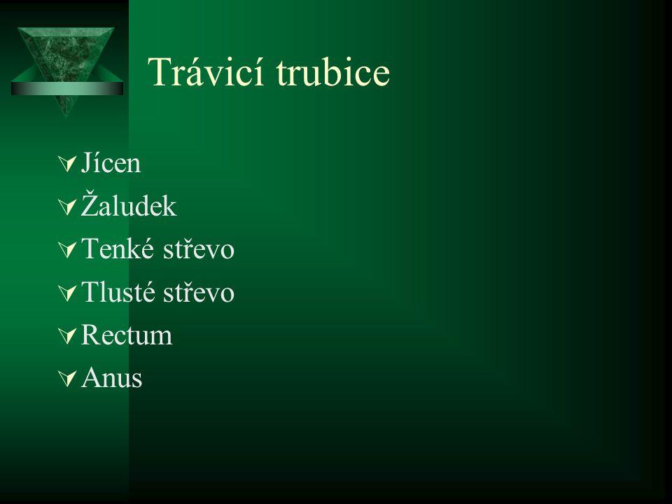 Trávicí trubice Jícen Žaludek Tenké střevo Tlusté střevo Rectum Anus