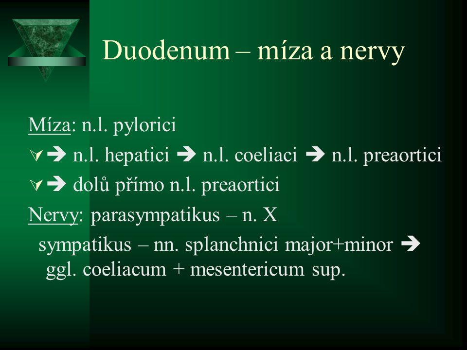 Duodenum – míza a nervy Míza: n.l. pylorici