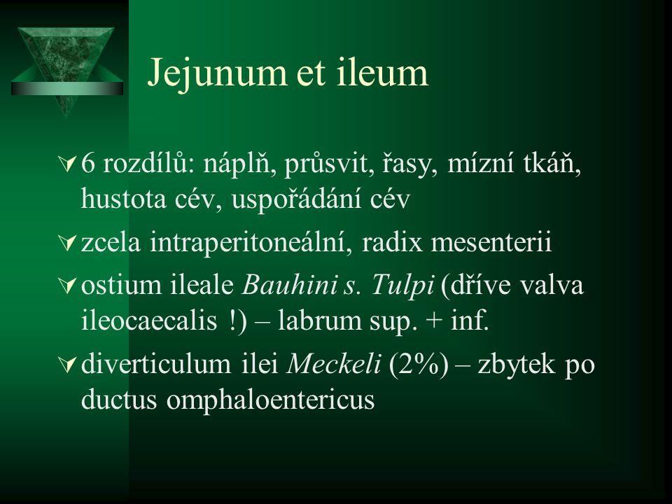 Jejunum et ileum 6 rozdílů: náplň, průsvit, řasy, mízní tkáň, hustota cév, uspořádání cév. zcela intraperitoneální, radix mesenterii.