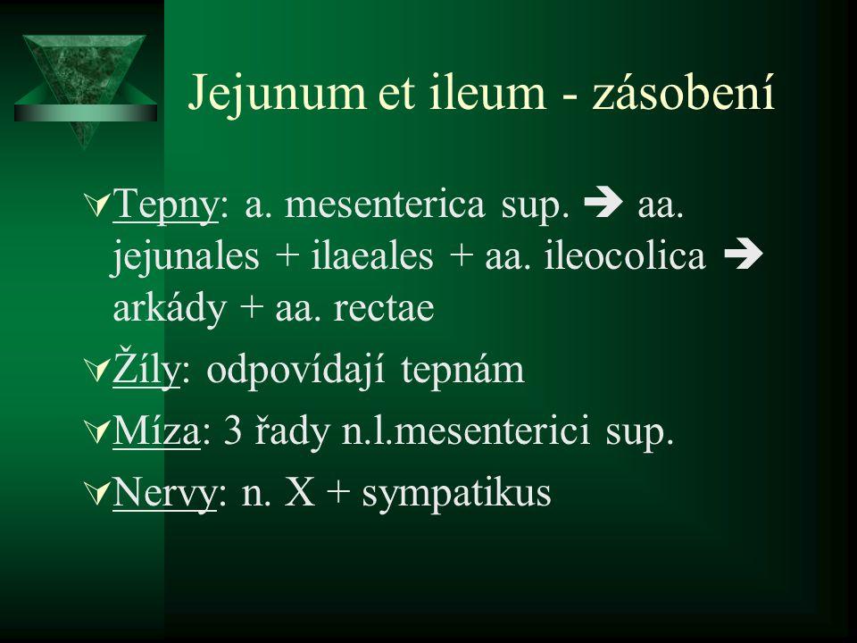 Jejunum et ileum - zásobení