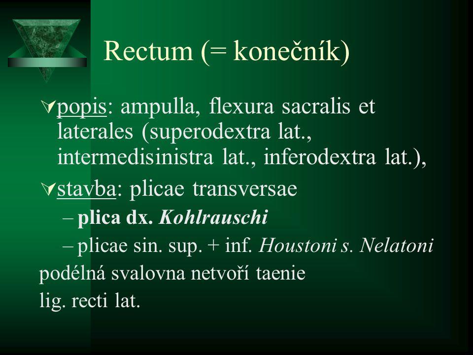 Rectum (= konečník) popis: ampulla, flexura sacralis et laterales (superodextra lat., intermedisinistra lat., inferodextra lat.),