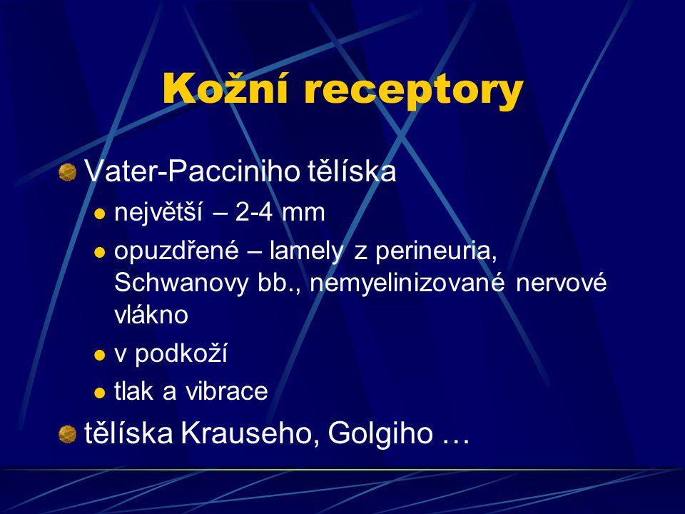 Kožní receptory Vater-Pacciniho tělíska tělíska Krauseho, Golgiho …