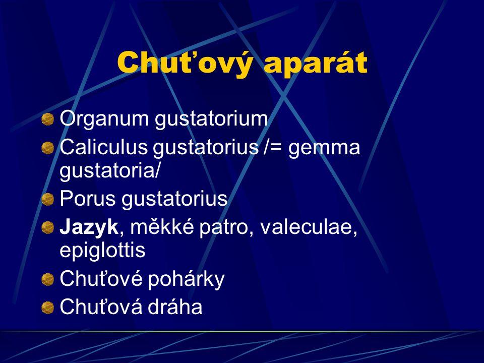 Chuťový aparát Organum gustatorium