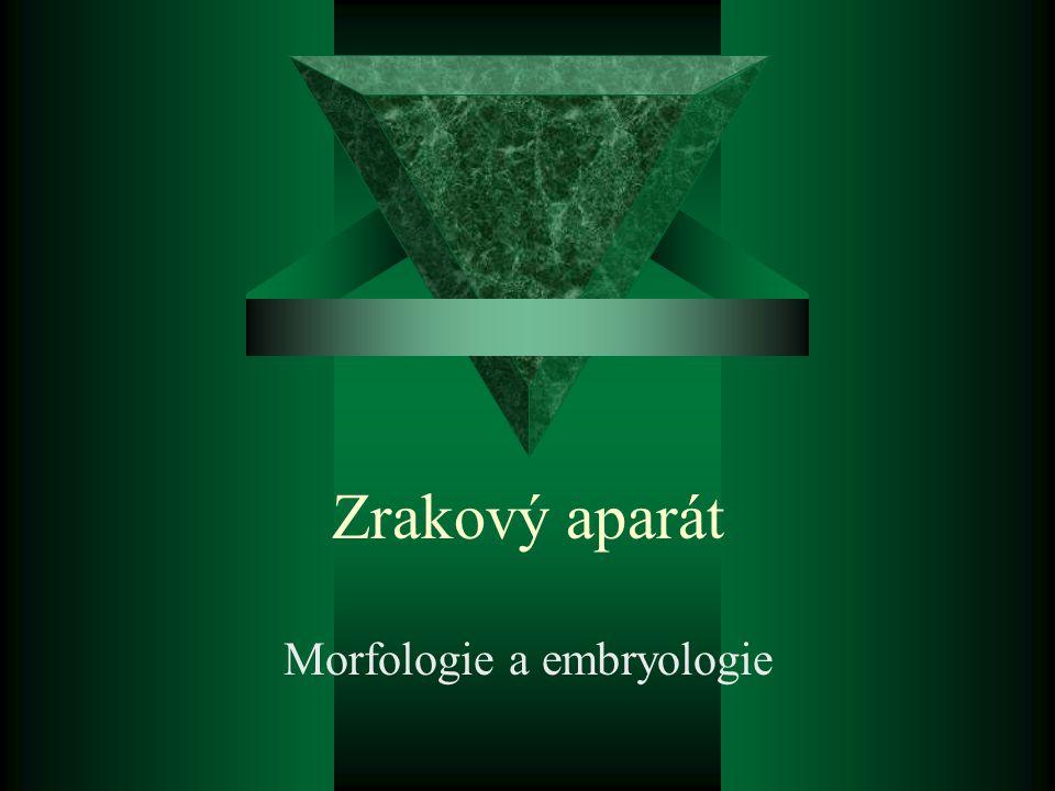 Morfologie a embryologie