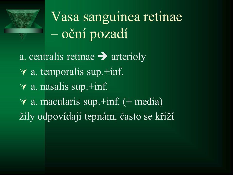 Vasa sanguinea retinae – oční pozadí