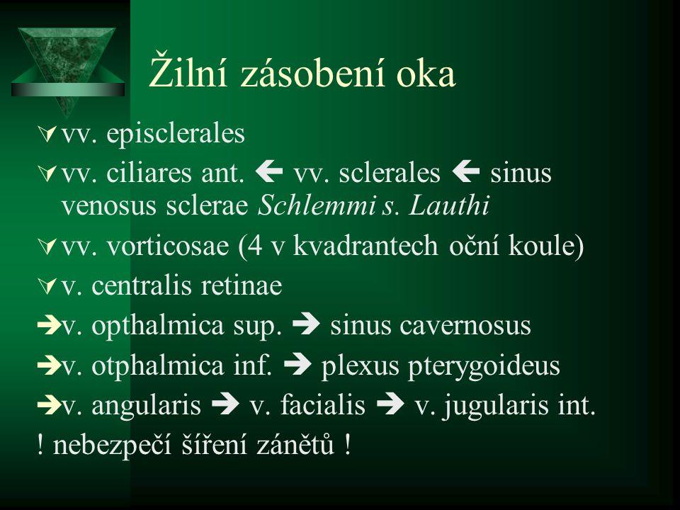 Žilní zásobení oka vv. episclerales
