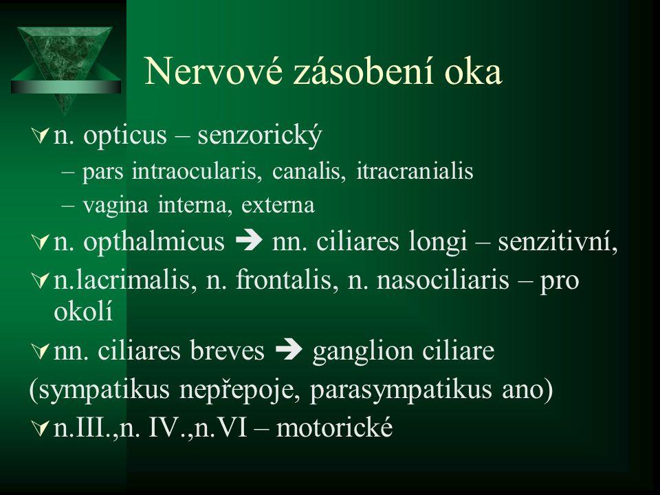 Nervové zásobení oka n. opticus – senzorický