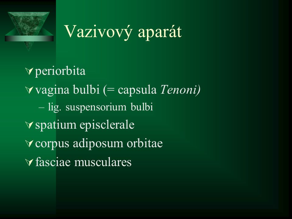 Vazivový aparát periorbita vagina bulbi (= capsula Tenoni)