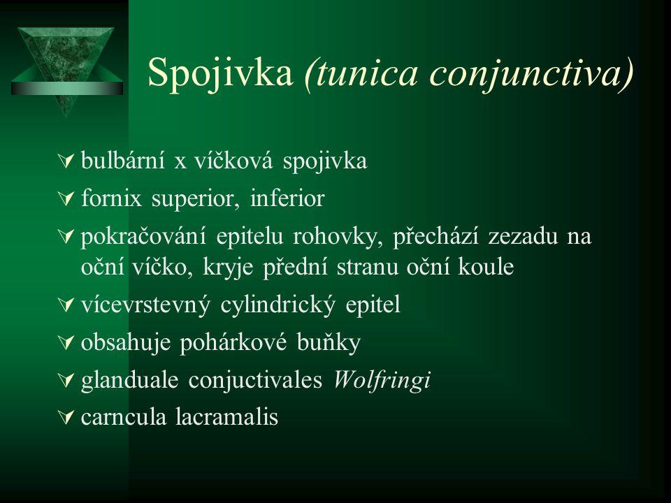 Spojivka (tunica conjunctiva)