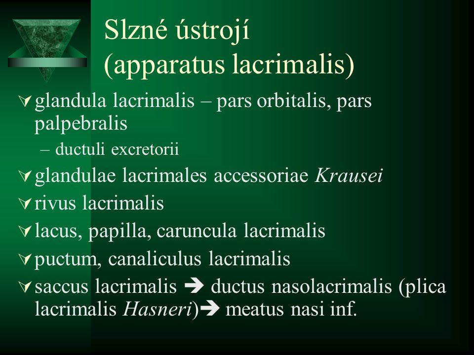 Slzné ústrojí (apparatus lacrimalis)