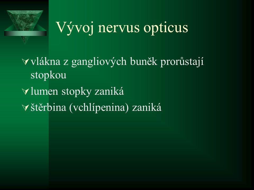 Vývoj nervus opticus vlákna z gangliových buněk prorůstají stopkou