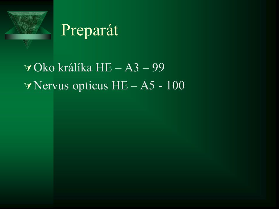 Preparát Oko králíka HE – A3 – 99 Nervus opticus HE – A5 - 100