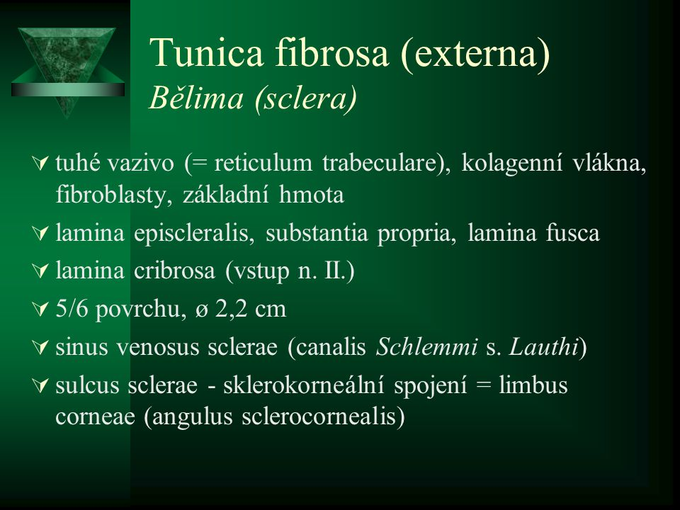 Tunica fibrosa (externa) Bělima (sclera)