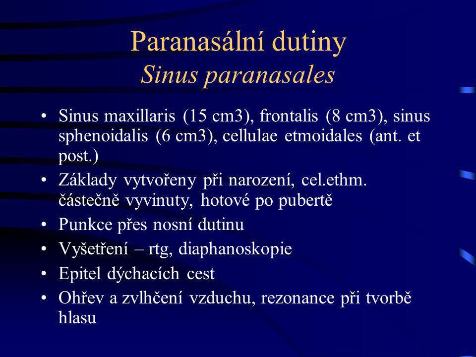 Paranasální dutiny Sinus paranasales
