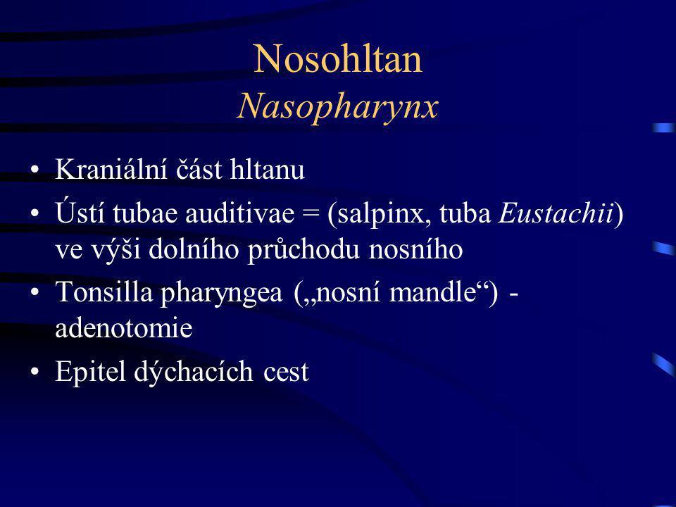 Nosohltan Nasopharynx