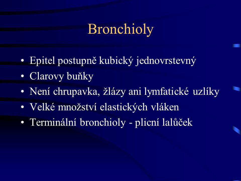 Bronchioly Epitel postupně kubický jednovrstevný Clarovy buňky