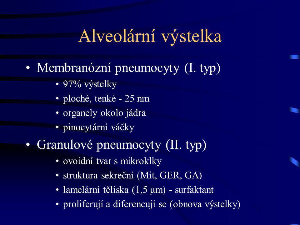 Alveolární výstelka Membranózní pneumocyty (I. typ)