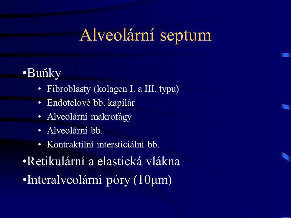 Alveolární septum Buňky Retikulární a elastická vlákna