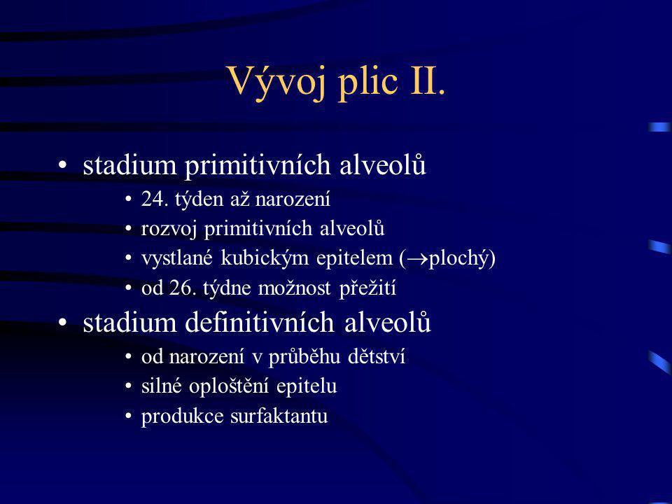 Vývoj plic II. stadium primitivních alveolů
