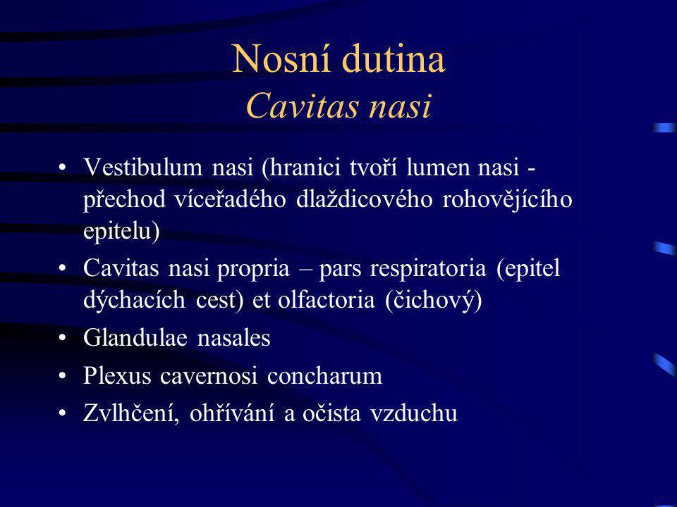 Nosní dutina Cavitas nasi