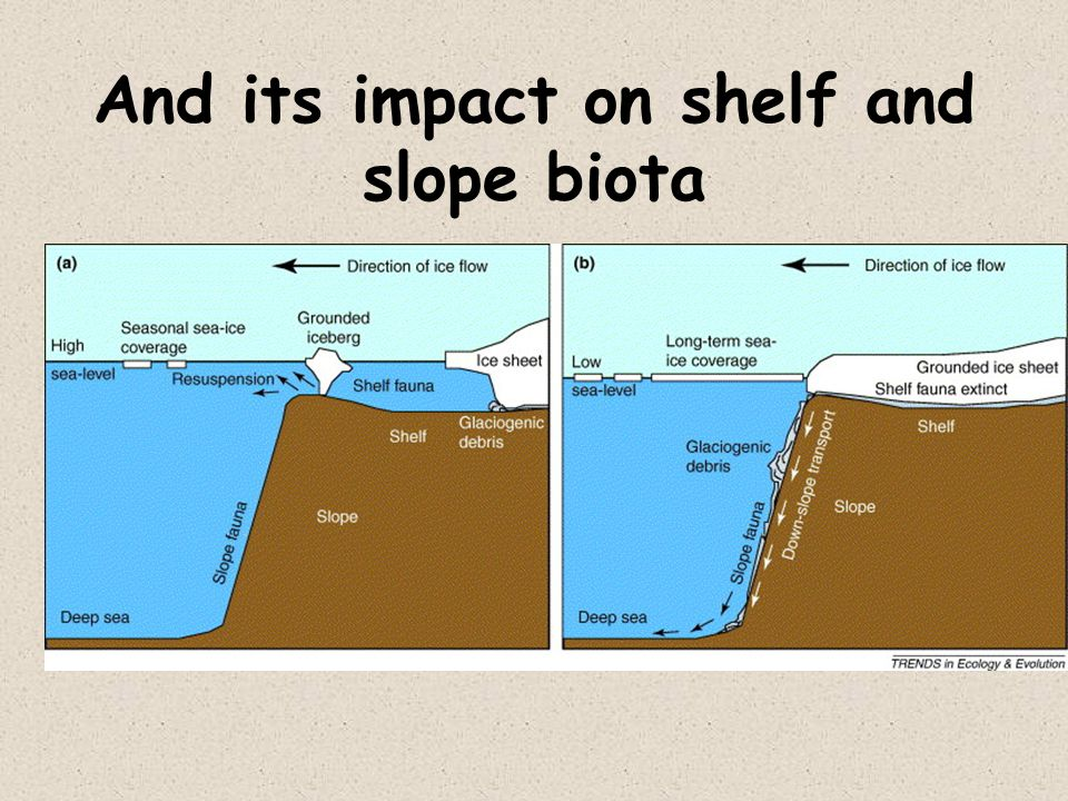 And its impact on shelf and slope biota