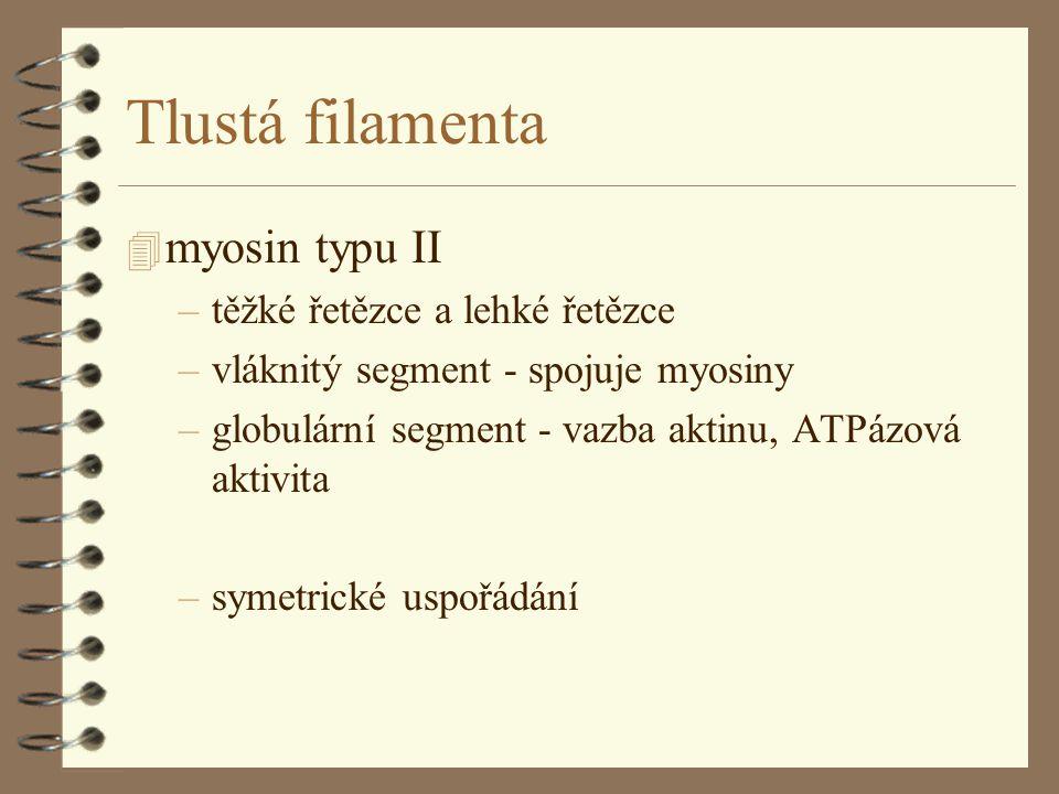 Tlustá filamenta myosin typu II těžké řetězce a lehké řetězce