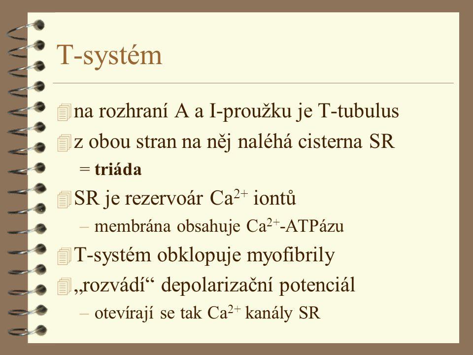T-systém na rozhraní A a I-proužku je T-tubulus
