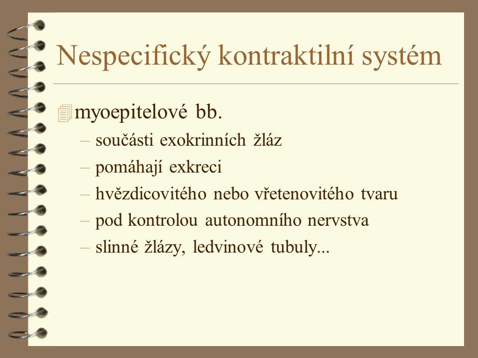 Nespecifický kontraktilní systém