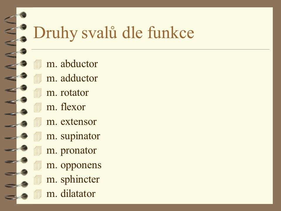 Druhy svalů dle funkce m. abductor m. adductor m. rotator m. flexor