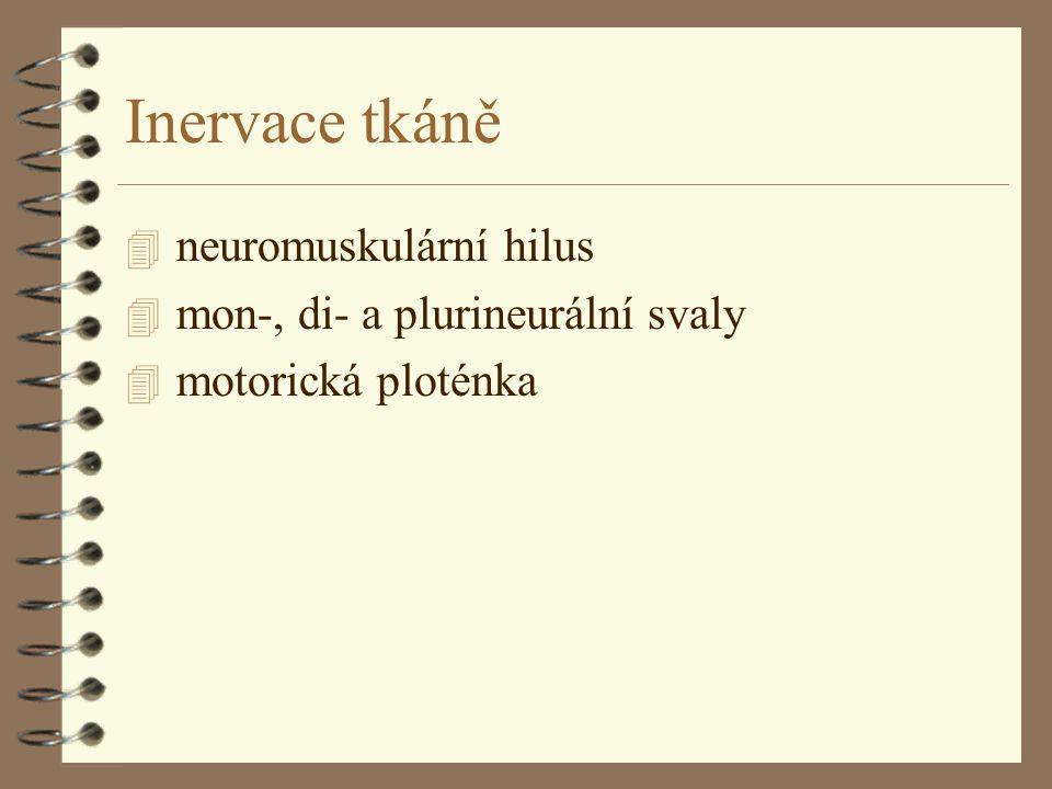 Inervace tkáně neuromuskulární hilus mon-, di- a plurineurální svaly