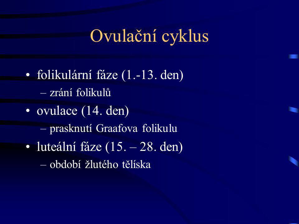 Ovulační cyklus folikulární fáze (1.-13. den) ovulace (14. den)