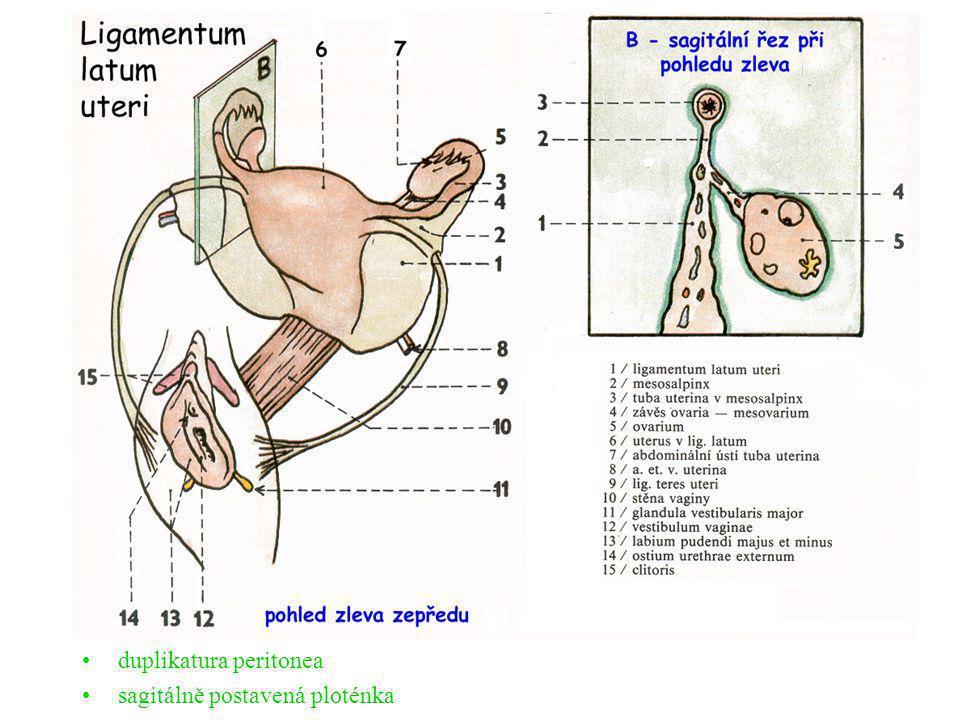 duplikatura peritonea