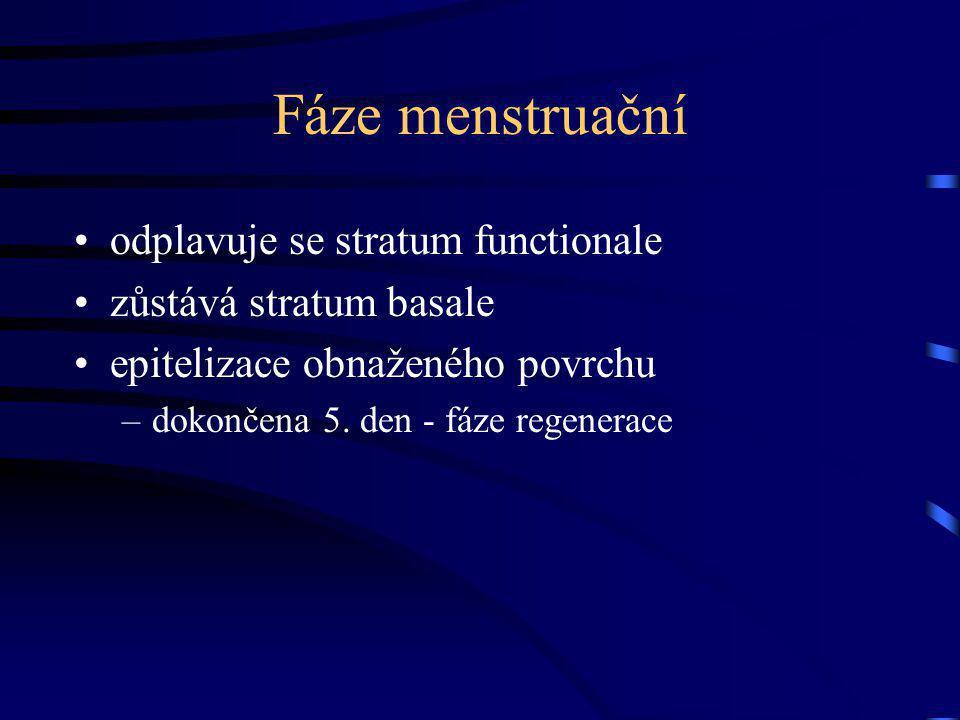 Fáze menstruační odplavuje se stratum functionale