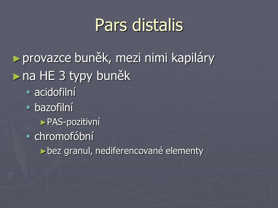 Pars distalis provazce buněk, mezi nimi kapiláry na HE 3 typy buněk