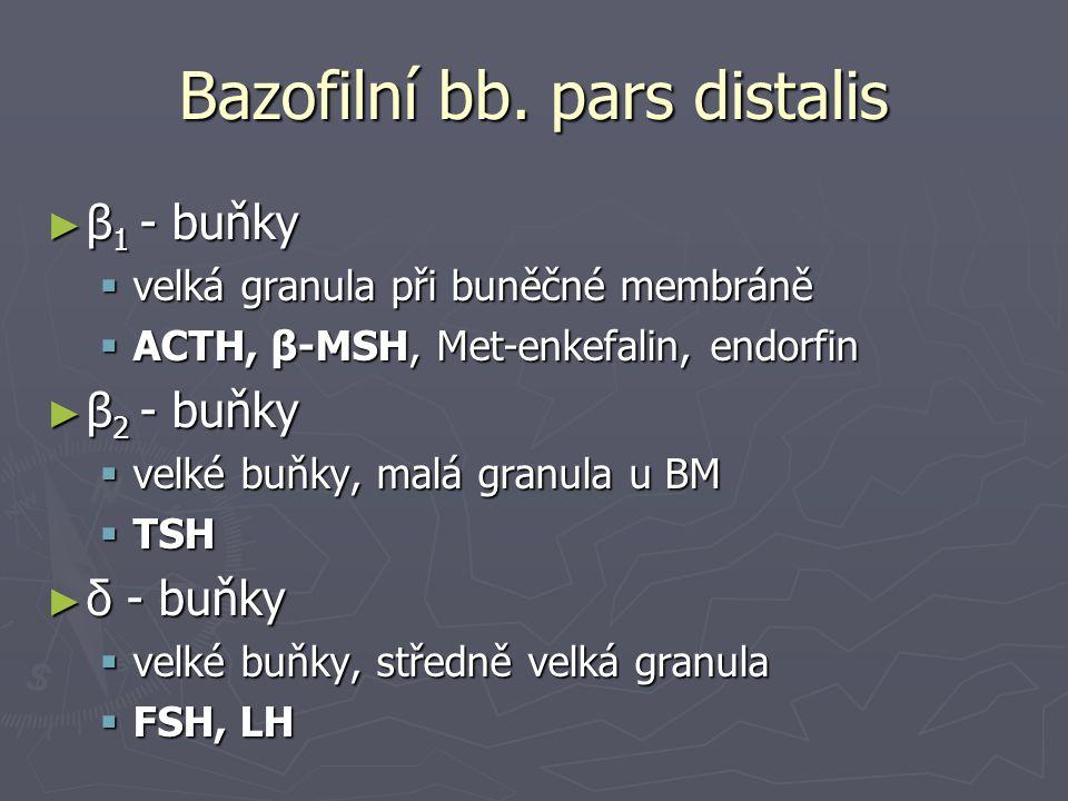 Bazofilní bb. pars distalis