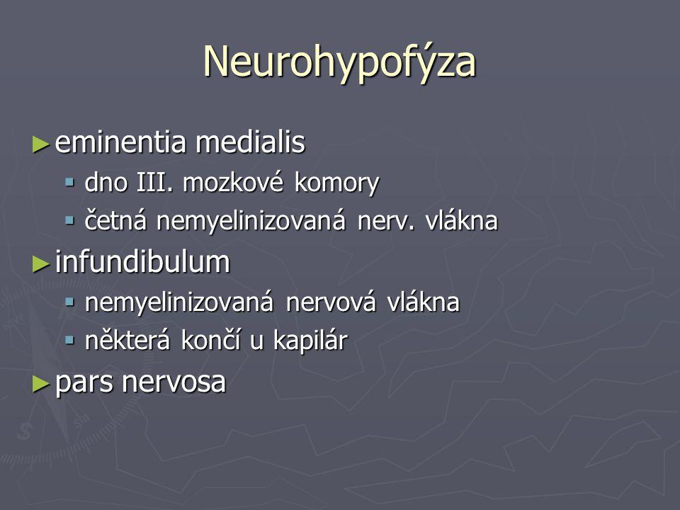 Neurohypofýza eminentia medialis infundibulum pars nervosa