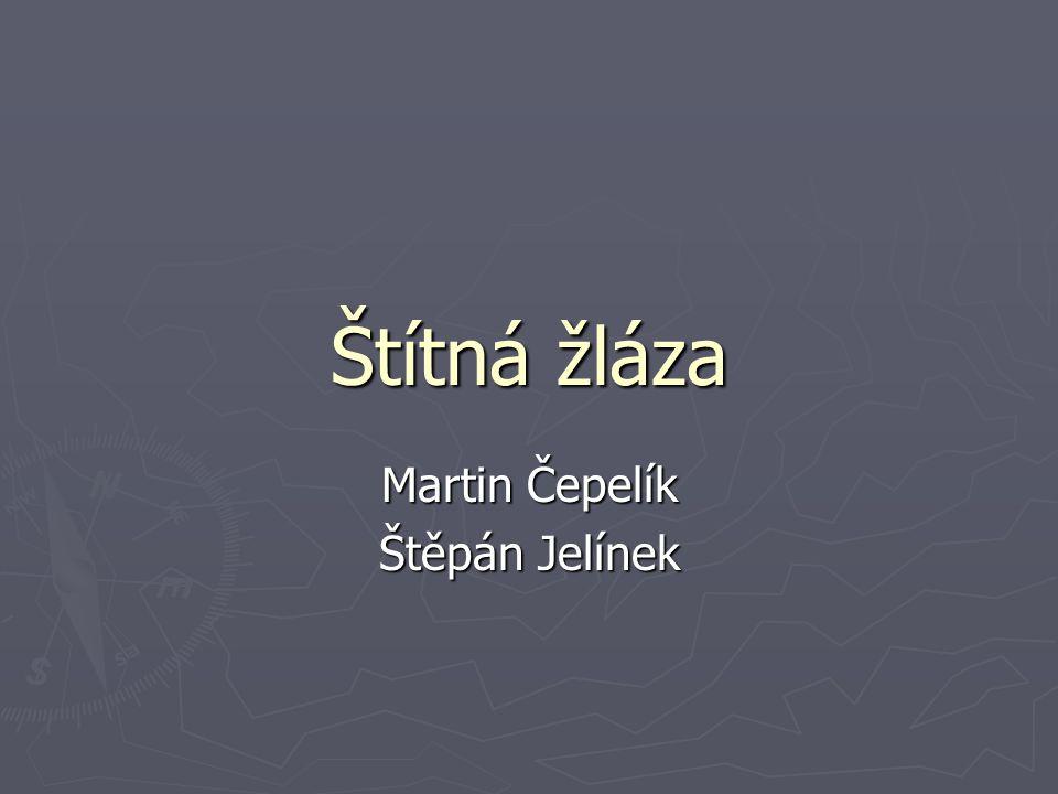 Martin Čepelík Štěpán Jelínek