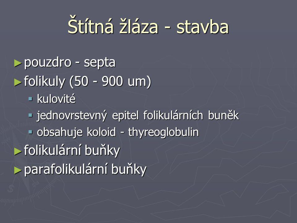 Štítná žláza - stavba pouzdro - septa folikuly (50 - 900 um)
