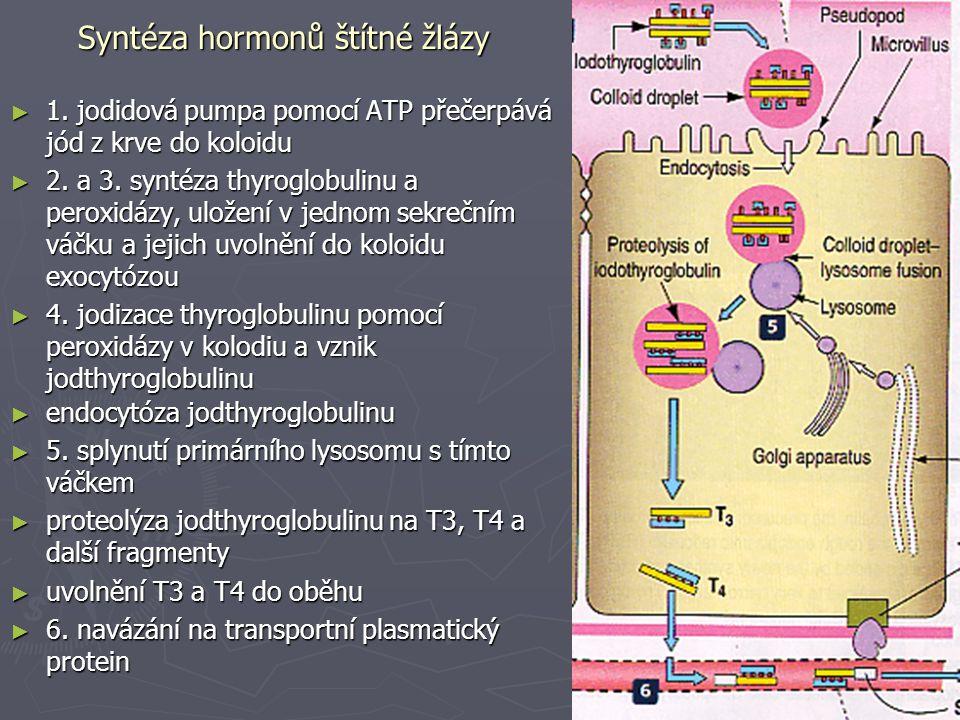 Syntéza hormonů štítné žlázy
