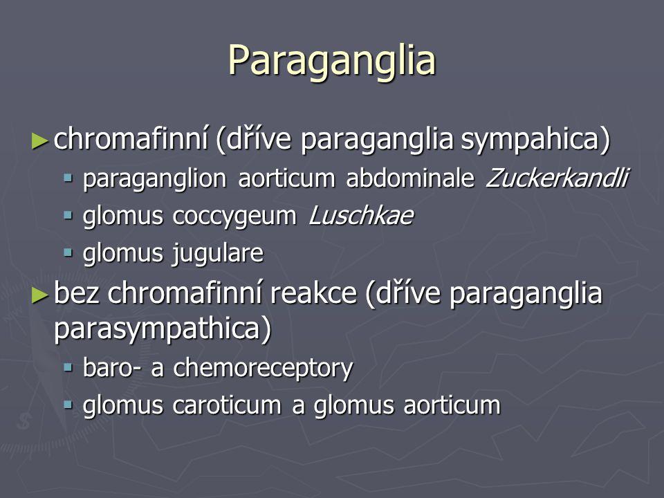 Paraganglia chromafinní (dříve paraganglia sympahica)