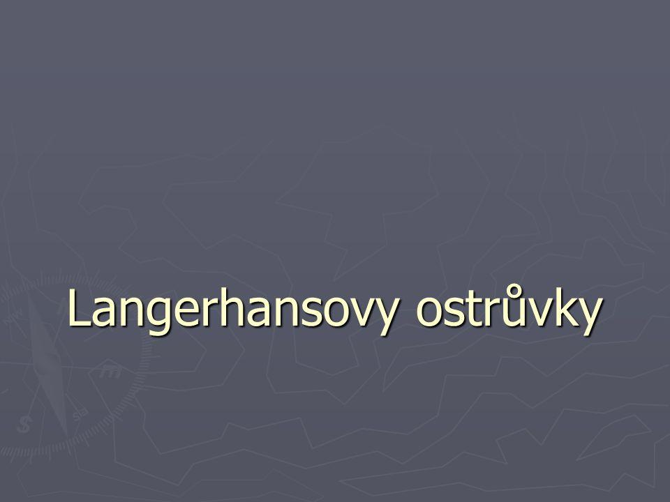Langerhansovy ostrůvky