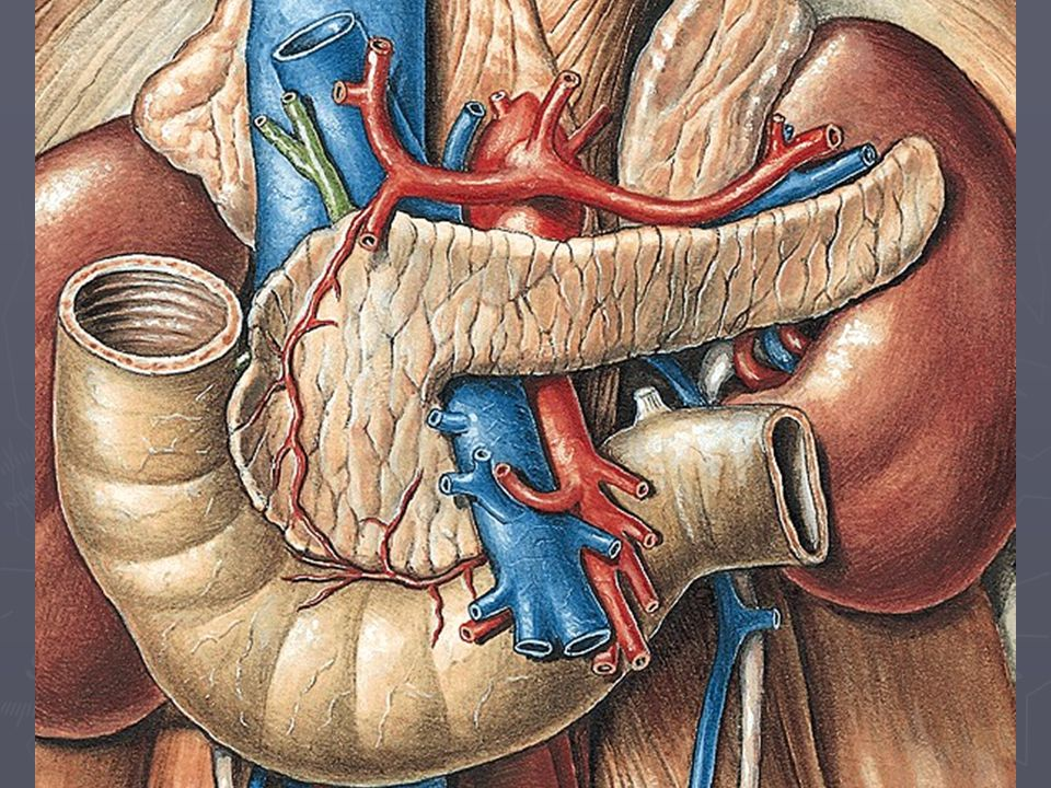 Pankreas - opakování exokrinní a endokrinní část topografie pankreatu
