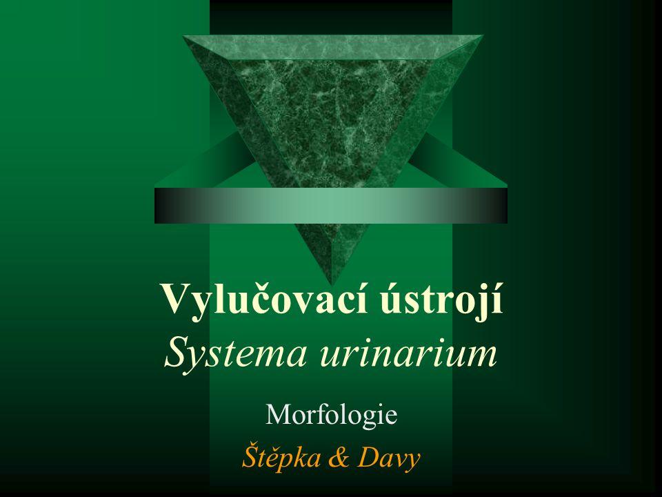 Vylučovací ústrojí Systema urinarium