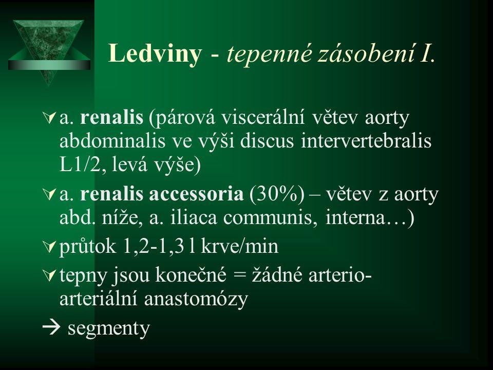 Ledviny - tepenné zásobení I.