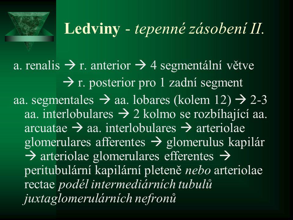 Ledviny - tepenné zásobení II.